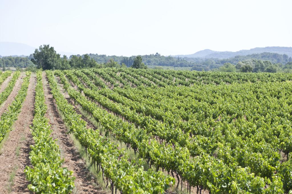 provence | Moxiblog