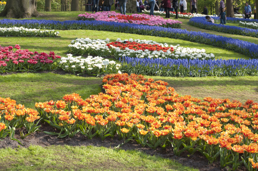 beds of color