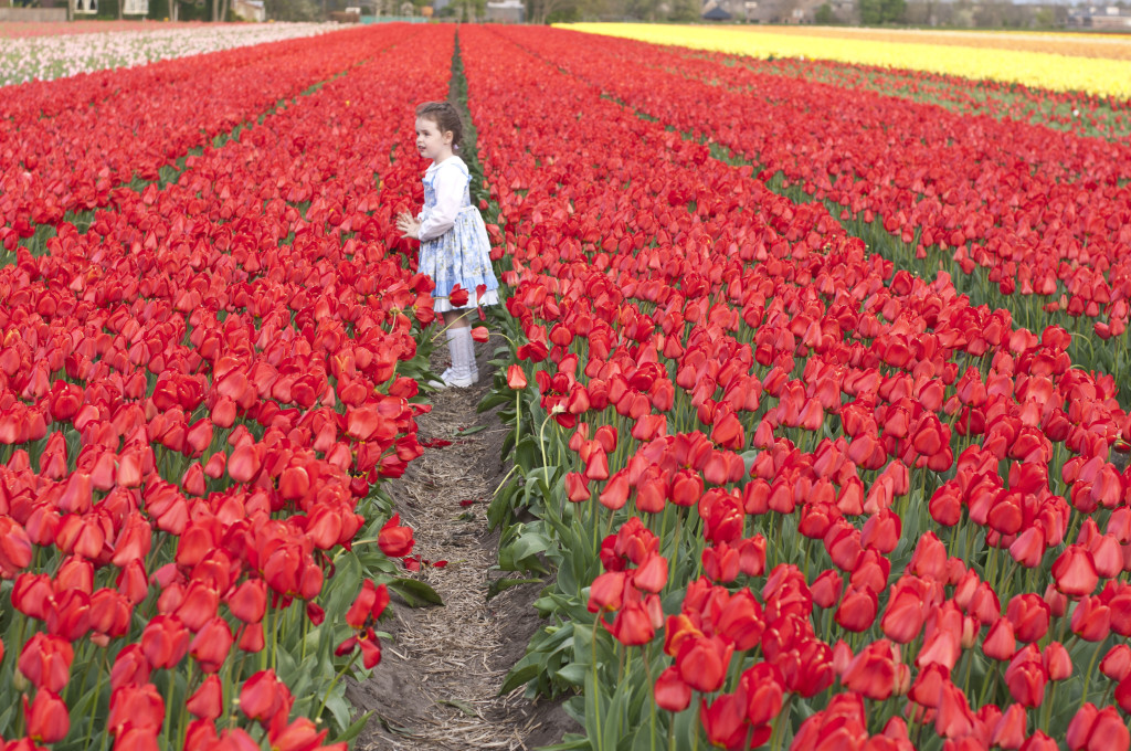 coco in field of red2
