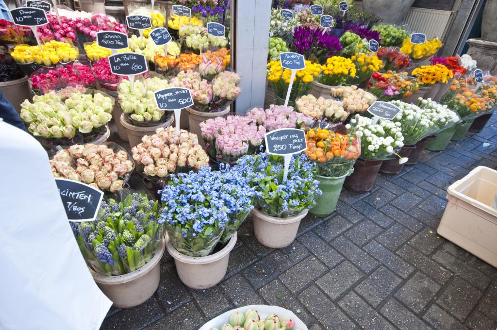 flower market cut flowers-forget me not_1