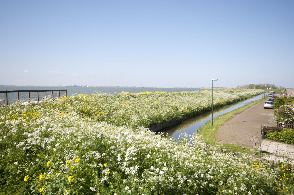 long prominade lined with wildflowers