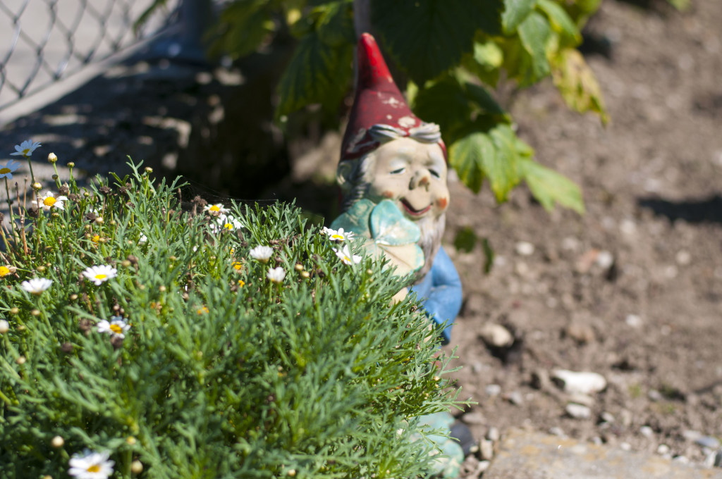 gnomes in swiss garden