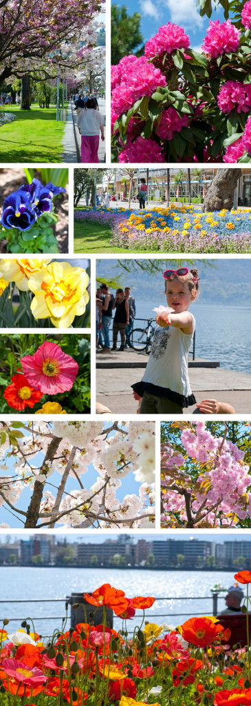 montage flowers locarno