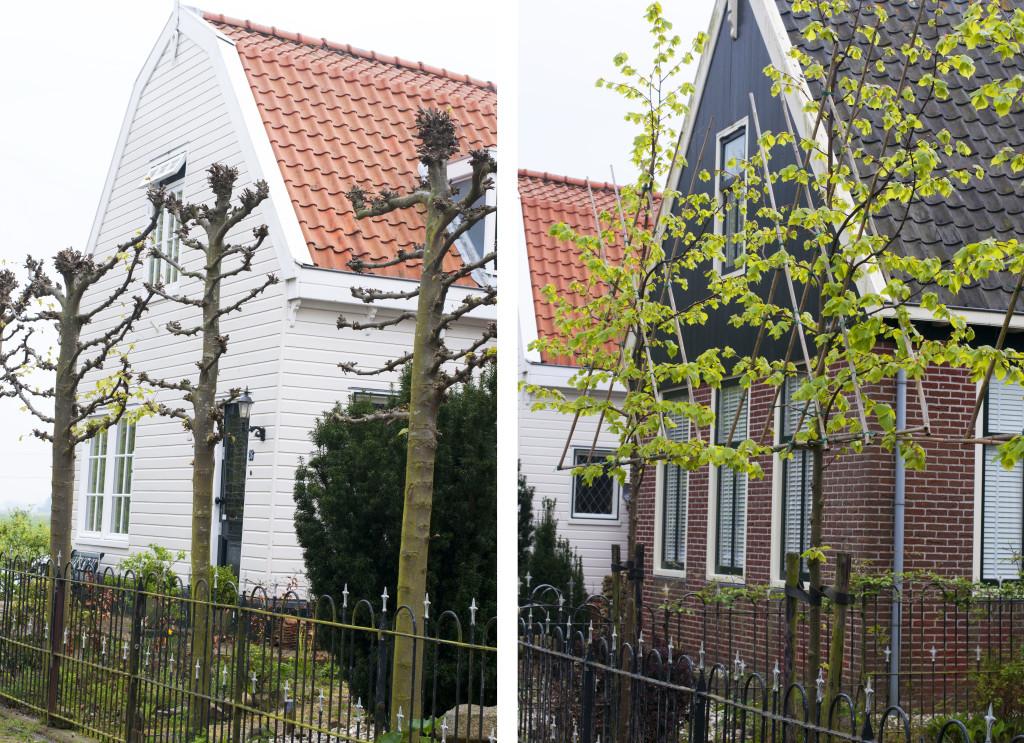 esparalles trees