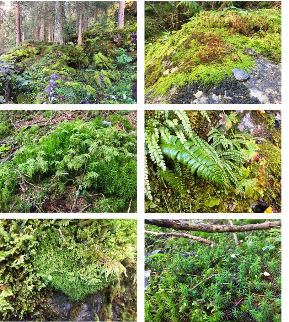 moss-montage-copy